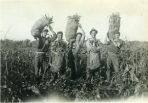 20 Harvesting corn Chramp Farm_1937._George_Talumbos_Bill_Criaris Fritz_Pandazis_Lou_Chrampanis_Nick_Susalis