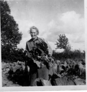 Winnifred Keany McHugh harvesting cabbage Loughrass, Glenfarne, Co Leitrim circa 1950s perhaps